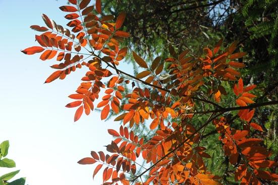 秋天景象1