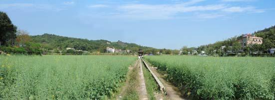 田园景象1